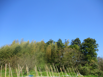 200406雲ひとつない青空