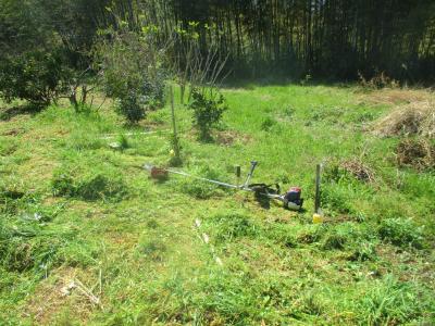 200406南側法面草刈り前