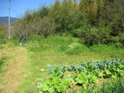 200406北側上部の草刈り前