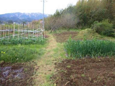 200409空の畑の様変わり1