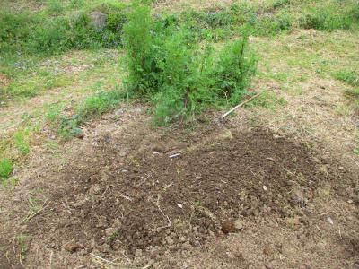 200417二十日大根種まき