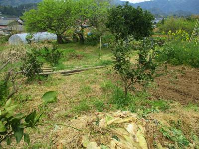 200417綺麗になっている空の畑1
