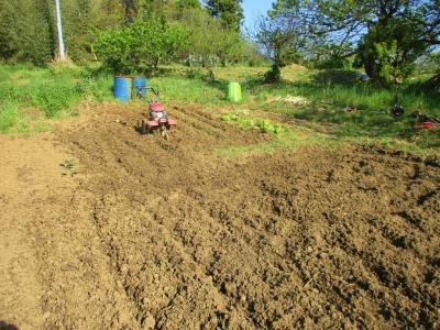 200425里芋の培地づくり