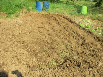 200427里芋の土作り
