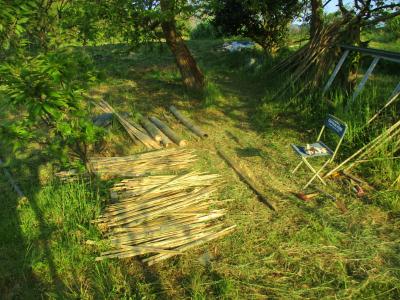 200430快適な木陰