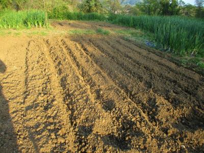 200430トマトの培地土づくり