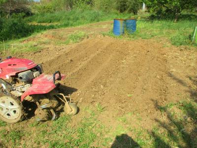 200501里芋の培地づくり