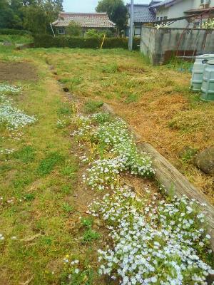 200503叔母の畑も草刈り1