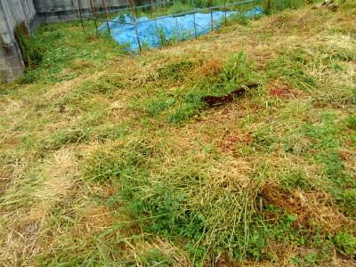 200503叔母の畑も草刈り2