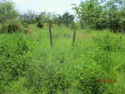 200505耕作放棄地に生えた筍