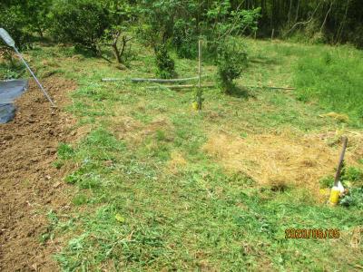 200505草刈り1