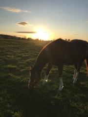 20191103 レイクヴィラファームで一番良い母馬シーゴー^^)