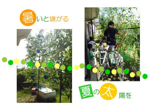 FB緑11