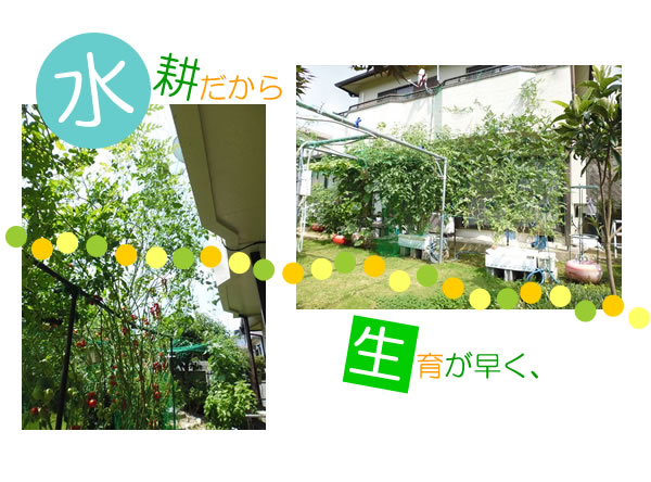 FB緑05