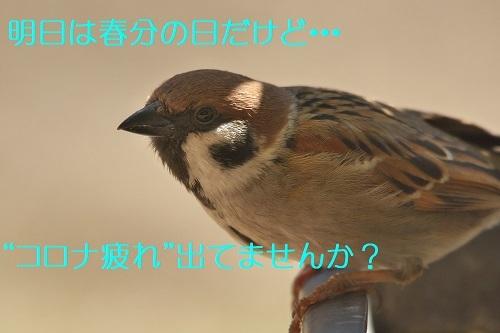 010_202003192138352b9.jpg
