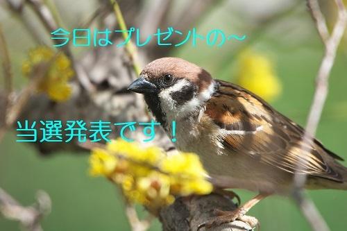 010_20200329212712200.jpg