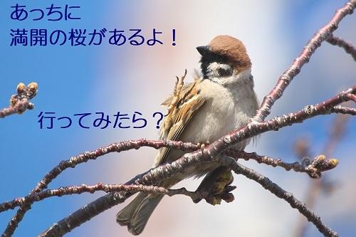 040_2020032522420939e.jpg