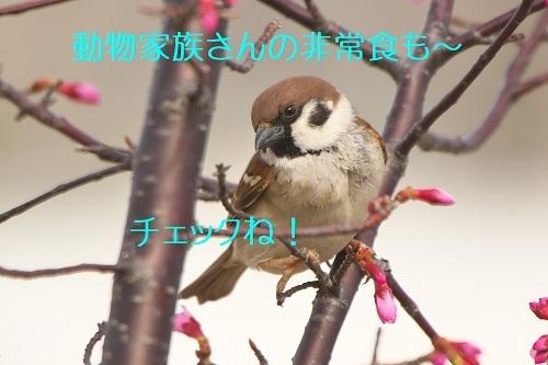 047_20200311232940fd1.jpg