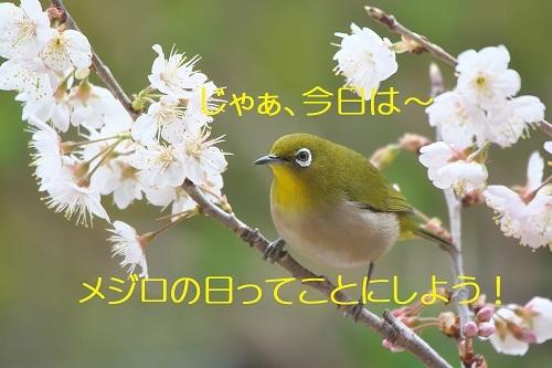050_20200321235454c65.jpg