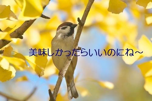 090_20191125214041992.jpg