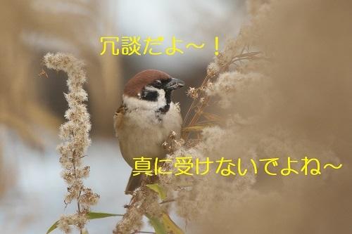 110_20200108223218e0e.jpg