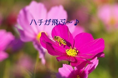 130_201911072218445c1.jpg