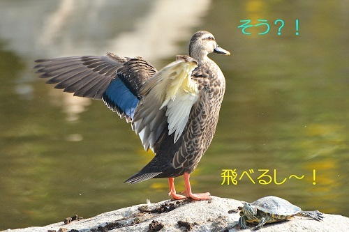 130_201911132145347a0.jpg