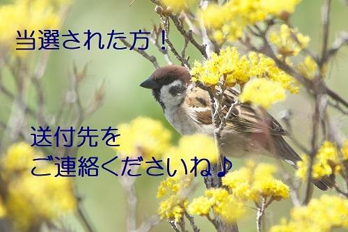 140_202003292127312c5.jpg