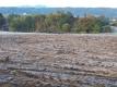 霜が降りた畑