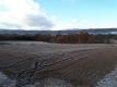 西の畑の霜