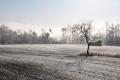 霧氷の景色①