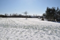 雪の麦畑②