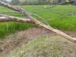 エノキの枝
