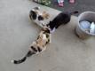 今日の猫たち