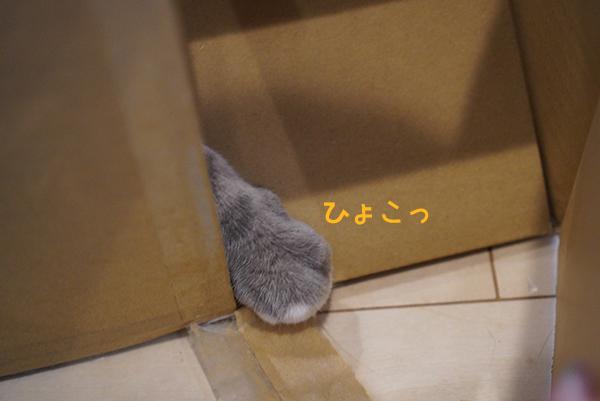 200514_1a.jpg