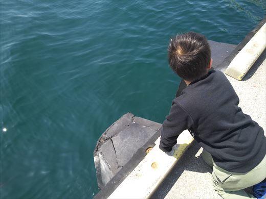 三浦半島釣り (11)