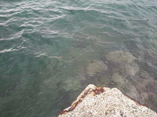 三浦半島釣り (36)