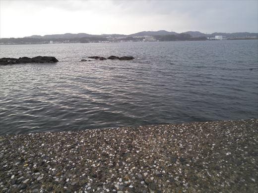 三浦半島釣り (39)
