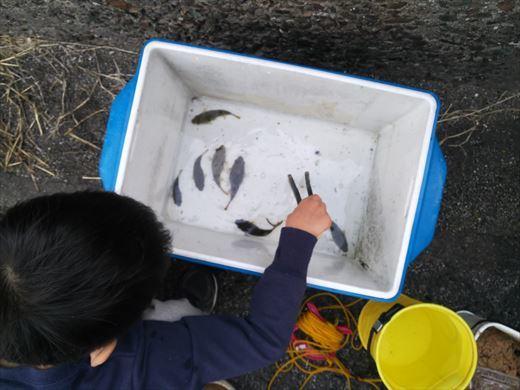 三浦半島釣り (43)