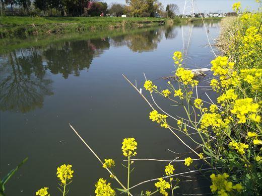 川で鯉釣り? (4)