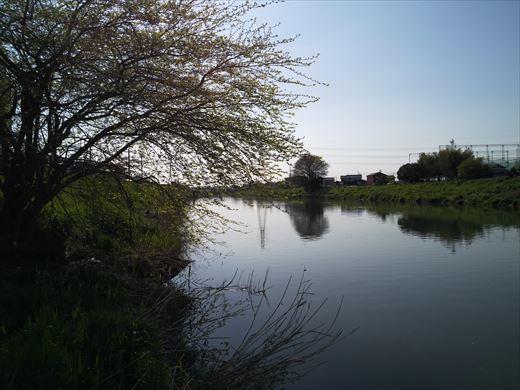 川で鯉釣り? (5)