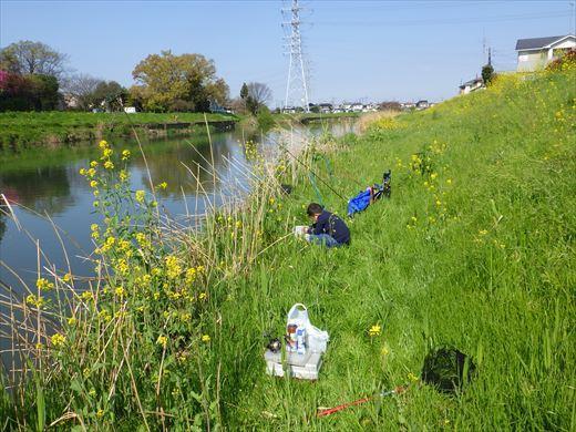 川で鯉釣り? (6)