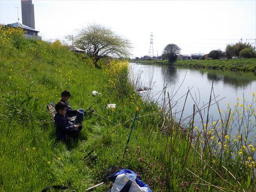 川で鯉釣り? (8)