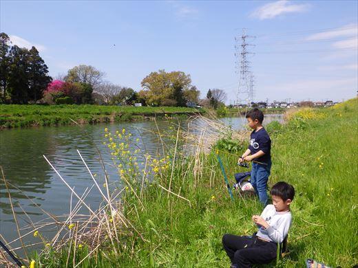 川で鯉釣り? (9)