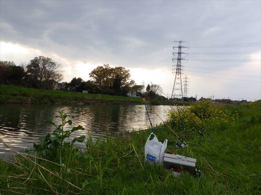 川で鯉釣り? (10)