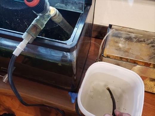 水槽掃除 (2)