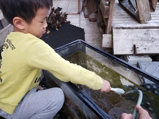 水槽掃除 (11)