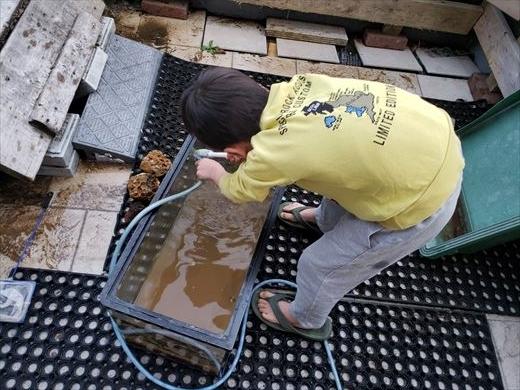 水槽掃除 (13)