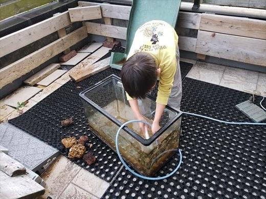 水槽掃除 (15)