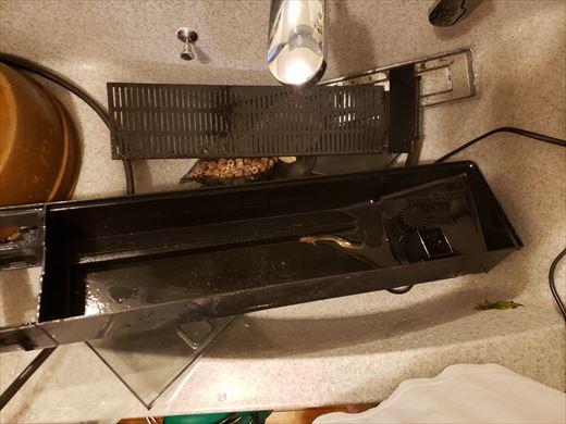 水槽掃除 (17)